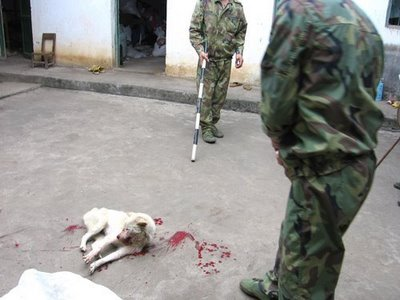 china_dog_slaughter.jpg