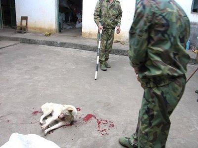china_dog_slaughter.jpg