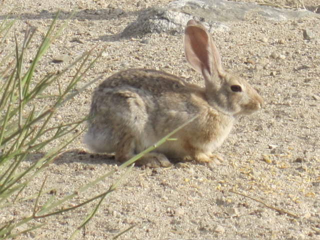 Awesome rabbit pic by Vanessa Sheldon